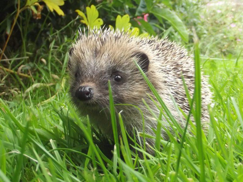 Wildlife in Suffolk churchyards